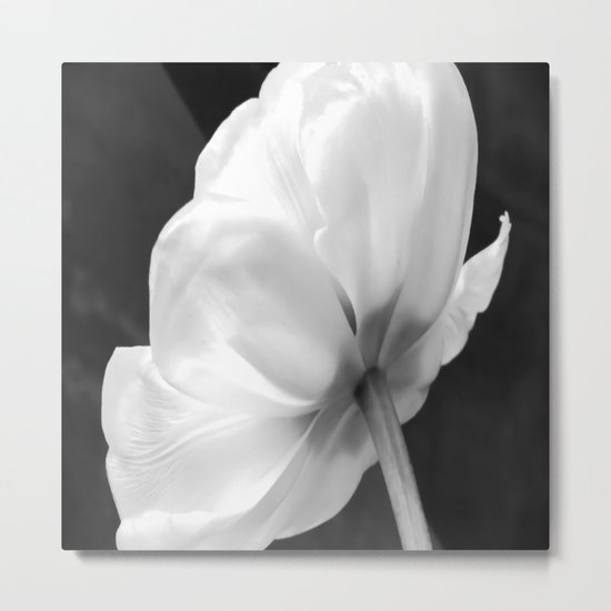 Close-up of white tulip in black background Metal Print