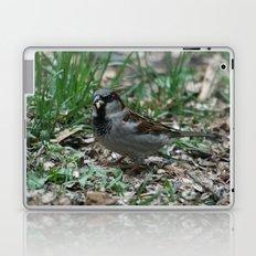 House Sparrow Laptop & iPad Skin