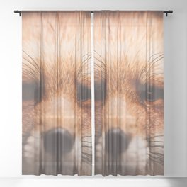 Red fox 2 Sheer Curtain