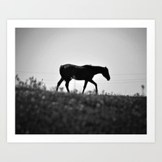 Horse with no name... Art Print