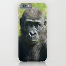 Gorilla Baby Shufai With A Piece Of Grass In His Mouth iPhone Case