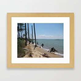 Chesapeake Bay Drift Wood Framed Art Print