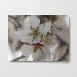 Almond Blossom Series 7 Metal Print
