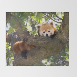 Red Panda Cutie Throw Blanket