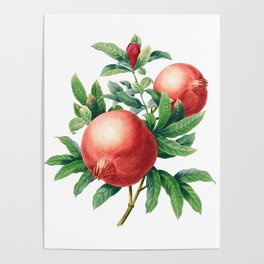 Pomegranate pattern II Poster