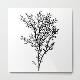 Seaweed 02 Metal Print