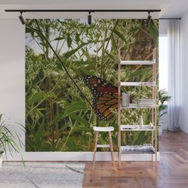 Feeding butterfly Wall Mural