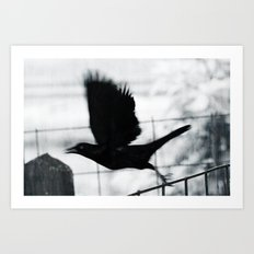Blackbird 3 Art Print