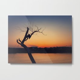 dry tree over sunset Metal Print