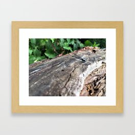 Co-Creating with Dragonfly Framed Art Print
