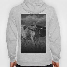 Texas Longhorn Steers under a Cloudy Sky in Black & White Hoody