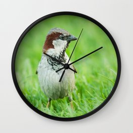 House Sparrow Wall Clock