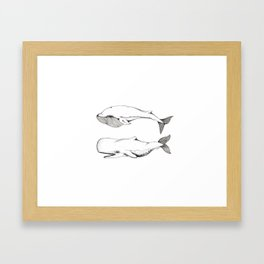 Two Whales. Framed Art Print