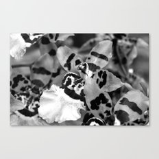 Leopard Orchid black and white Canvas Print