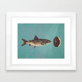 Irresistible Bait  Framed Art Print