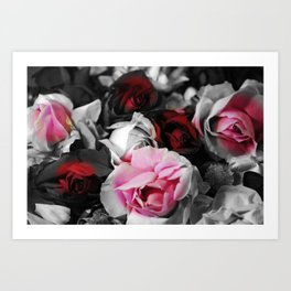 Black and White Roses Fade to Pink and Red Art Print