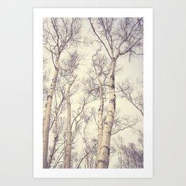 Winter Birch Trees Art Print
