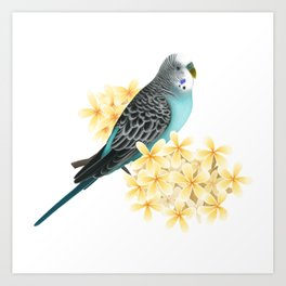 Blue Budgerigar Art Print