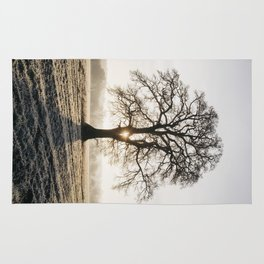 Sunrise behind a tree on a frosty morning. Norfolk, UK. Rug