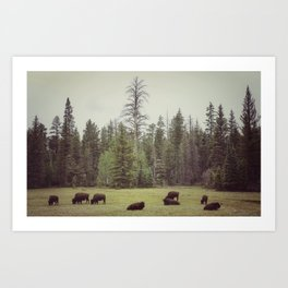 Grand Canyon Buffalo Art Print
