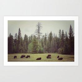 Grand Canyon Buffalo Art Print