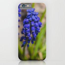 Grape Hyacinth 3 iPhone Case