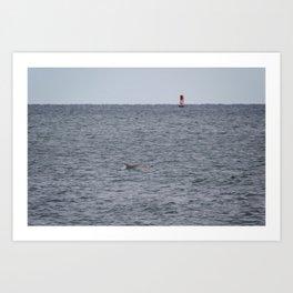 dolphins Art Print