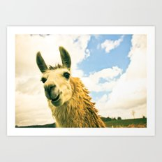 No Drama Llama Art Print
