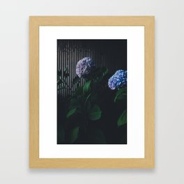 Purple Hydrangea Framed Art Print