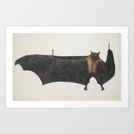 Vintage Indian Fruit Bat Illustration (1782) Art Print