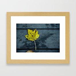Beautiful autumnal leaf Framed Art Print