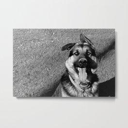 A Dog's Stunning Stare Metal Print