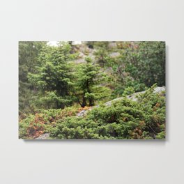 Within the Silent Forest Metal Print