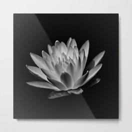 Upton Water Lily Metal Print