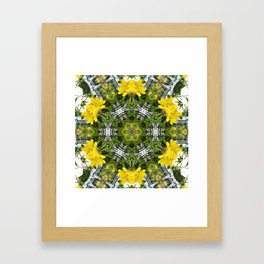 Kaleidoscope of showy St Johns Wort Framed Art Print