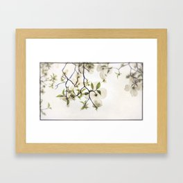 White Dogwoods Framed Art Print