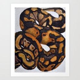 Boa Constrictor Art Print