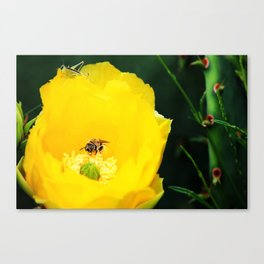 Cactus Flower, Bee and Grasshopper Canvas Print