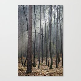 Magical winter light Canvas Print