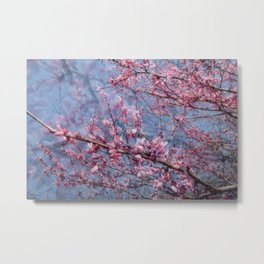 Redbud Blooms Metal Print