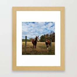 Two Horse Amigos in Pasture Framed Art Print