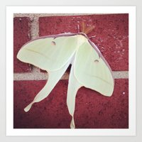 Luna Moth on a brick wall Art Print