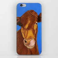 cow iPhone & iPod Skins featuring Cow by maggs326