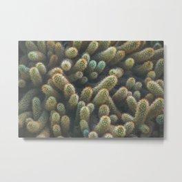Botanical Gardens - Cactus #596 Metal Print