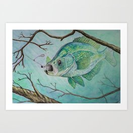 Crappie and Jig Art Print