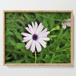 Pretty Purple Californian Flower by Reay of Light Photography Serving Tray