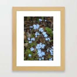 Copious Forget-Me-Nots Framed Art Print