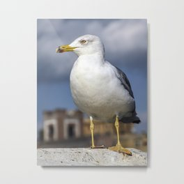 Herring Gull Metal Print
