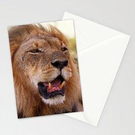 Lion - Africa wildlife Stationery Cards