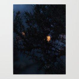 Bokeh thorns Poster